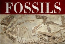 Fossils  / Limestone is all about fossils!