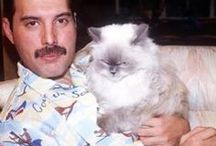 The Great Pretender ❤ ✊ / FREDDY MERCURY  1946-1991 One of the people I wish I could've met