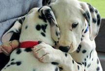 ANIMALES / MASCOTAS / Fotografías de animales preciosos. #pets #perros #dogs