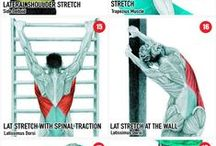Stability Exercises
