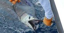 Sports Fishing ORP