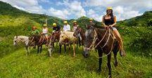 Equestrian Escapade