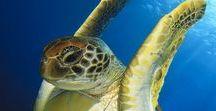 Sea Turtle Turnt-up!