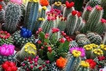 jardines,cactus y plantas