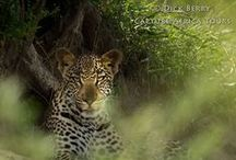 Photo Gear & Shooting Smarter / by Capture Africa Tours
