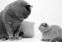 Vanilla cats
