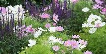 lottes garden