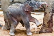 ZOOvasion! / Our favorite pins from zoos and wildlife centers around the world.  / by Zoo Atlanta