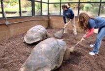 YOU @ the Zoo!  / Epitomizing the Zoo Atlanta experience for people of all ages.  / by Zoo Atlanta