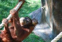Babies! / Squee! Aww! Eek! Vocalize to your heart's content over our Zoo babies.  / by Zoo Atlanta