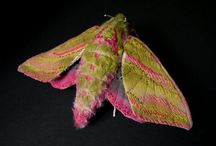 Fabric- Butterflies and moths  / by Kim Jackson