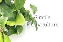 || Simple Permaculture || / Permaculture and how it relates to small scale homesteading. Garden, gardening, permaculture, cover crops, Vegetable gardening, Veggie gardens Farming farming, Farm date, Permaculture design, mulching, mulch, self sufficient, Potager garden Landscaping, Backyard ideas, Permaculture, Aquaponics, Balconies, Compost, get started, start vegetable garden, tips, skills, frugal, survivalism, homesteading ideas, simple living, self sufficient small farm hacks, urban garden, saving money