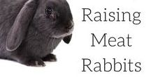 || Colony Raising Meat Rabbits || / Colony raising Rabbits is the most natural way of raising rabbits, allowing the rabbits to free range. Meat rabbits, group housing, hutches, rabbit tractor,  rabbitry, meat rabbits housing, rabbit care, rabbits, rabbit breeds, rabbit hutch, rabbit recipe, meat rabbit breeds, New Zealand, Silver Fox, Californian, meat rabbits breeds website, rabbit care indoor, rabbit care outdoor, rabitat
