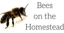 || Keeping Bees on the Homestead || / Keeping bees on the homestead, or even in your urban garden is a fantastic way to preserve and protect the bees, pollinate your garden and get honey! Bees, keeping bees, hive, keeping bees, bees in the garden, beekeeping for beginners, keeping bees in the backyard, bees keeping for beginners backyards