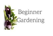 || Beginner Gardening || / Tips hints and tricks for a beginner gardener. Starting a garden from scratch and growing vegetables. vegetable gardening beginner backyards seeds growing food gardening for beginners vegetables self sufficiency urban farming modern homestead