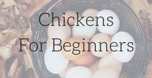 || Keeping Chickens for Beginners || / Keeping chickens in your backyard for beginners. Caring for chickens, poultry, roosters, laying hens, eating chickens, meat chickens, raising birds, backyard chickens, breeds, ideas, coops, chicken food, feeding chickens, raising chickens in your backyard, chickens backyard ideas, yards, chicks, eggs, incubator