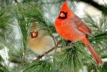 Birds / by Lana N