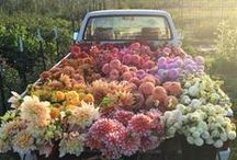 * Beauty of Flowers * / ~~Valentines, Bridal Bouquets, Centerpieces + Others~~