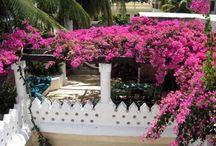 Gorgeous Homes / Kenyan Coast / Swahili and Lamu style