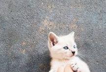 (~`Cute`~)