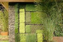 Green Roofs and Walls