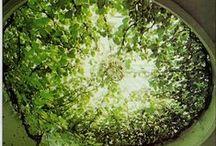* -Gardens- * / Peace- Garden of Eden Inspiration