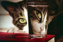 Felinos - Cats