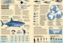 Sharks facts / Infographies et informations sur les requins