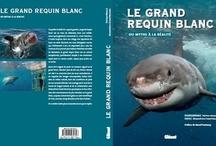 La librairie du requin / Sharks books