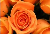 Orange / Makes me happy
