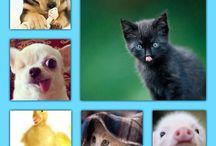 Cute / Cutest animals ever plz like