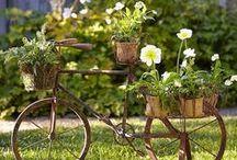Flowers-garden