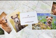 The Phodographer Store / Dog, adventure, British outdoors themed cards, calendars and wall art by The Phodographer