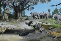 Florida's Prehistory