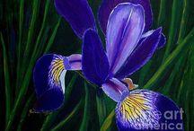 Irises with Purple / Purple Irises