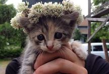 Cute Cats / Pictures of cute cats.