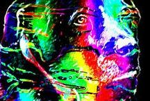 Rainbow Color Images / This gallery holds images with a rainbow of jazzy, psychedelic colors. Each image has texture and digital effects that are intentional and add a grainy effect to the overall image.