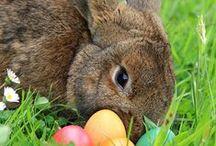 Osterhase / Den Osterhasen beim Eier verstecken gesehen.