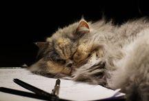 Katzen / Katzen und ihr typisches Verhalten - einfach herrlich anzusehen.