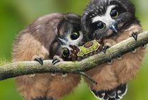 Vögel - Eulen / Eulen in ihrem Lebensraum und auf leichten Schwingen