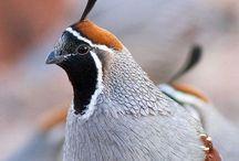 Vögel / Fotografien rund um das liebe Federvieh.
