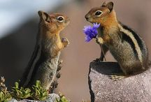 Freche Nager - Hörnchen / Witzige und lustige Fotografien aus der Hörnchenwelt