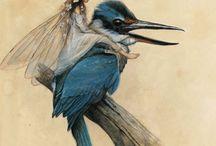 kotori / 小鳥