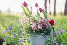 Flowers / favorite flowers