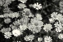 F L O R A L / Flowers <3