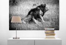 Torsten Reuter Fotokunst / Künstlerisch gestaltete Fotos, die als Acrylglasbilder zu phantastischen Highlights an ihren Wänden werden. Die Bilder werden exklusiv in Bielefeld produziert und weltweit versandt.   #Arfika #Safari #Natur #Wildnis #Tiere #Reise