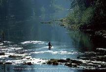 Fly Fishing / All things about Fly Fishing