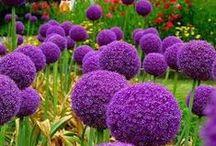 The colour series: Purple