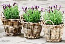 Lavender / So calming!