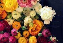 Freaking Great: Flowers